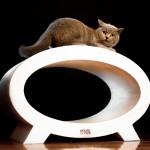 Drapak Elipso Cat