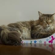 drapak tekturowy dla kota legowisko
