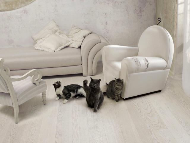 koty drapiące meble