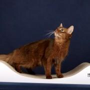sofa wh kot