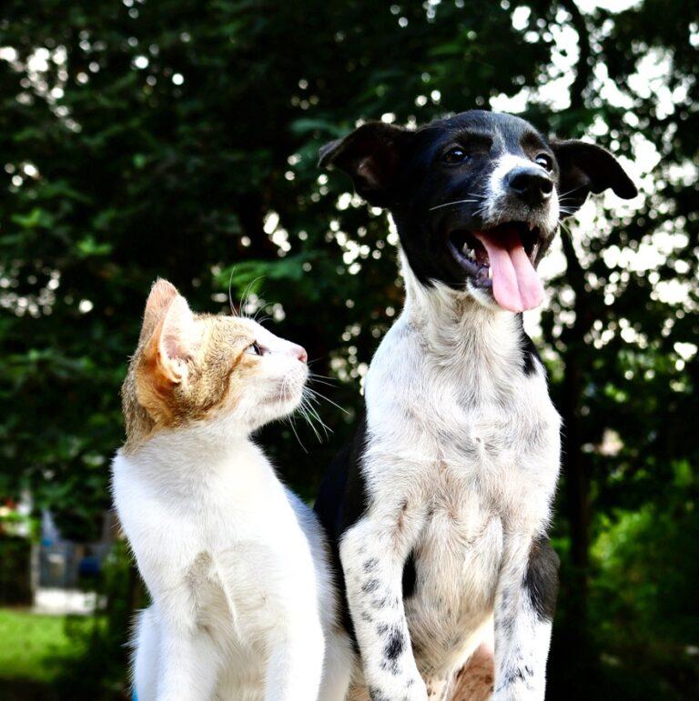 Dlaczego kot a nie pies?